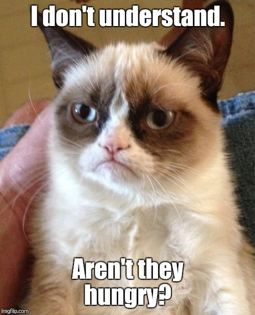 Grumpy Cat Meme | I don't understand. Aren't they hungry? | image tagged in memes,grumpy cat | made w/ Imgflip meme maker