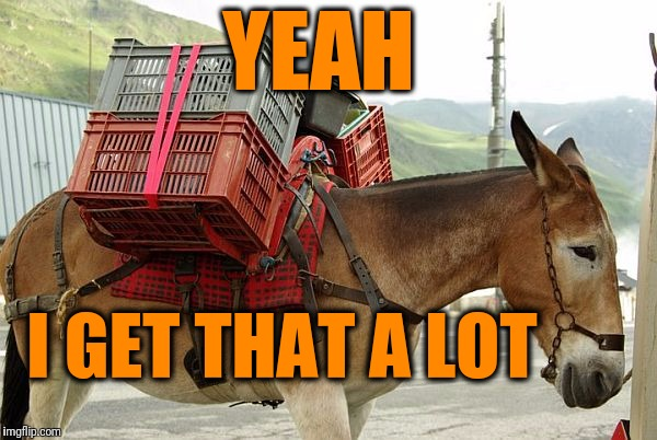 mule | YEAH I GET THAT A LOT | image tagged in mule | made w/ Imgflip meme maker