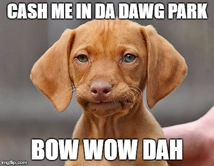 Getting down dog. | CASH ME IN DA DAWG PARK BOW WOW DAH | image tagged in disappointed puppy,cash me ousside how bow dah | made w/ Imgflip meme maker