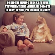 Funny animals |  SO DID THE MOVING TRUCK GET HERE YET WITH MY BED? WHEN AM I GOING TO BE FED?  HEY KID, I'M TALKING TO YOU!!! | image tagged in funny animals | made w/ Imgflip meme maker