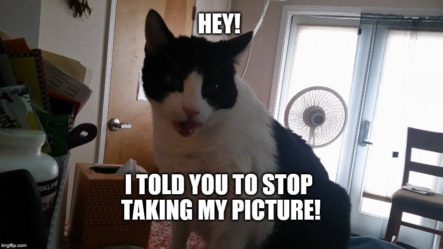 Hey stop taking my picture | HEY! I TOLD YOU TO STOP TAKING MY PICTURE! | image tagged in hey,stop that | made w/ Imgflip meme maker