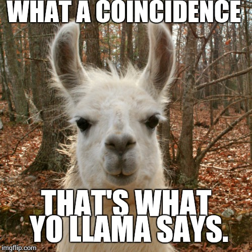 yo llama | WHAT A COINCIDENCE THAT'S WHAT YO LLAMA SAYS. | image tagged in yo llama | made w/ Imgflip meme maker