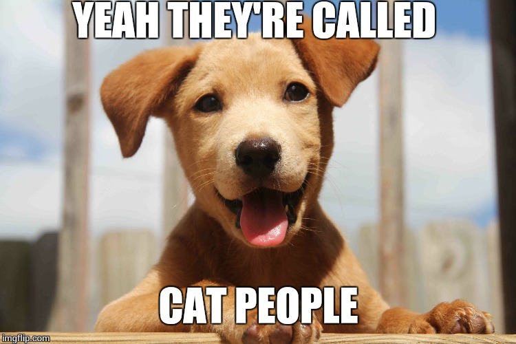 cute pup | YEAH THEY'RE CALLED CAT PEOPLE | image tagged in cute pup | made w/ Imgflip meme maker