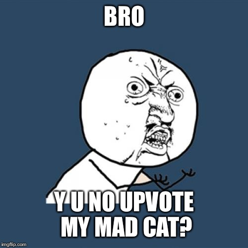 Y U No Meme | BRO Y U NO UPVOTE MY MAD CAT? | image tagged in memes,y u no | made w/ Imgflip meme maker