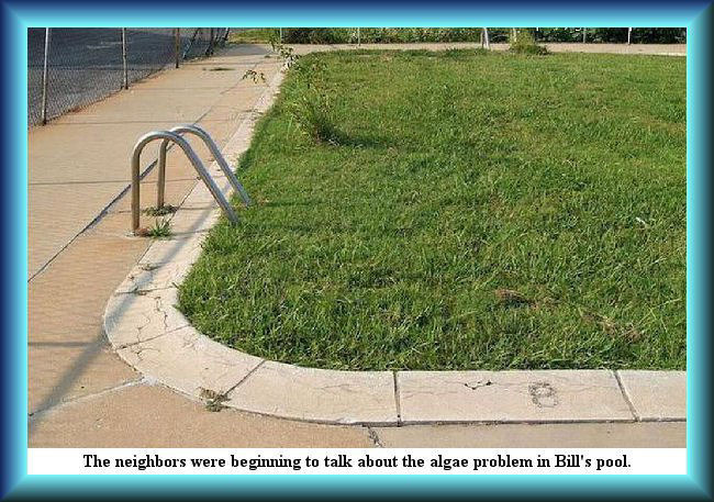 Summer time pool maintenance: You gotta be on top of it every second  | THE NEIGHBORS WERE BEGINNING TO TALK ABOUT THE ALGAE PROBLEM IN BILL'S POOL. | image tagged in summer,swimming pool,algae problem,memes,punography | made w/ Imgflip meme maker