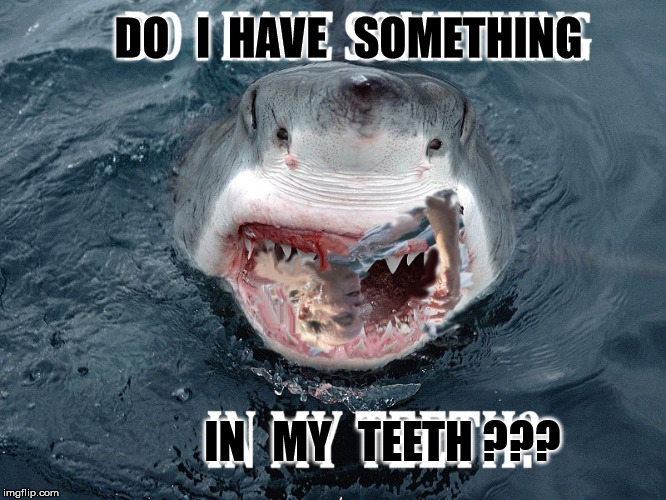 Shark Question | DO   I  HAVE   SOMETHING IN   MY   TEETH ??? | image tagged in jaws shark teeth,funny memes,shark bite,ocean,water,jack sparrow being chased | made w/ Imgflip meme maker