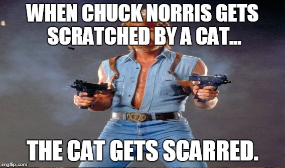 WHEN CHUCK NORRIS GETS SCRATCHED BY A CAT... THE CAT GETS SCARRED. | made w/ Imgflip meme maker