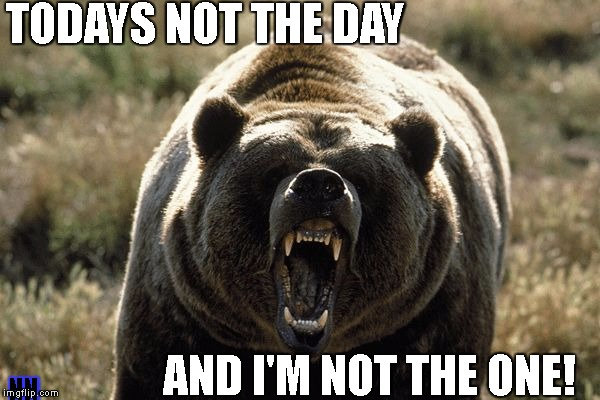 TODAYS NOT THE DAY AND I'M NOT THE ONE! NN | image tagged in mad bear | made w/ Imgflip meme maker