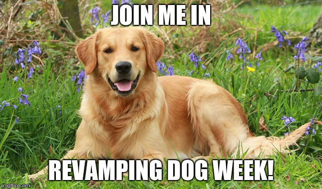 Golden Doggo | JOIN ME IN REVAMPING DOG WEEK! | image tagged in golden doggo | made w/ Imgflip meme maker
