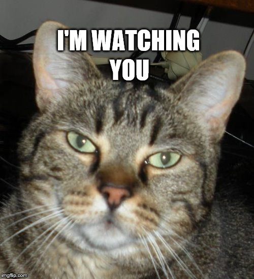 I'm Watching You |  YOU; I'M WATCHING | image tagged in watching you | made w/ Imgflip meme maker