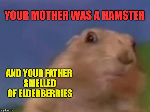 Movie one liner week - a jeffnethercot event! May 22-28. :) | YOUR MOTHER WAS A HAMSTER AND YOUR FATHER SMELLED OF ELDERBERRIES | image tagged in dramatic prairie dog,username,movie quotes,movie one liner week,jeffnethercot may 22-28,monty python | made w/ Imgflip meme maker