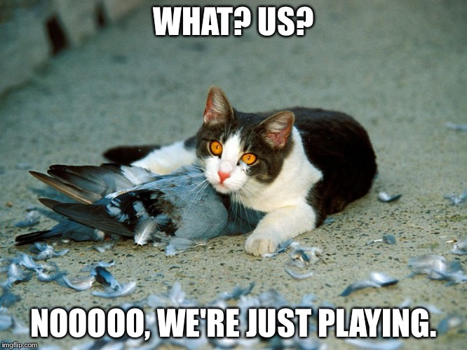 Funny Cat Meme Generator : Cats. sweet cute little things they are. imgflip