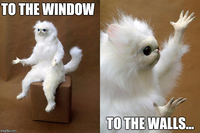 Movie One Liner Week - a jeffnethercot event. May 22-28! Do your worst! | TO THE WINDOW TO THE WALLS... | image tagged in memes,persian cat room guardian | made w/ Imgflip meme maker