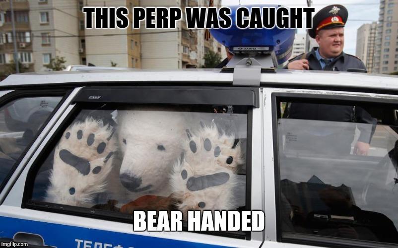 Got caught...! | B | image tagged in bear,cops | made w/ Imgflip meme maker