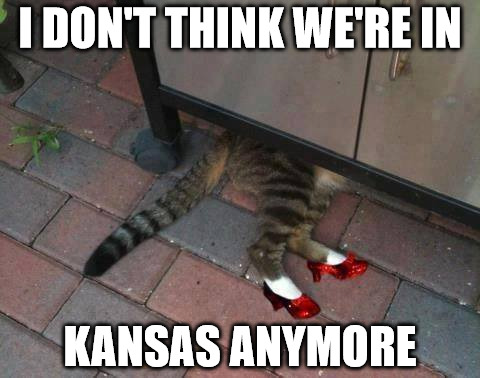 "The cast from the Broadway Musical, ""CATS"" is now doing a remake of ""The Wizard of Oz"" 