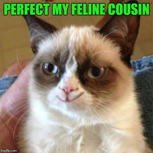PERFECT MY FELINE COUSIN | made w/ Imgflip meme maker