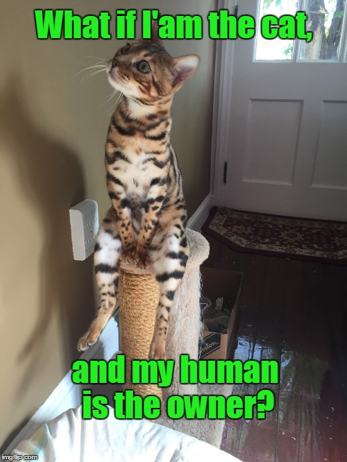 Cat thoughts. | What if I'am the cat, and my human is the owner? | image tagged in funny cats,cat chilling,reality | made w/ Imgflip meme maker
