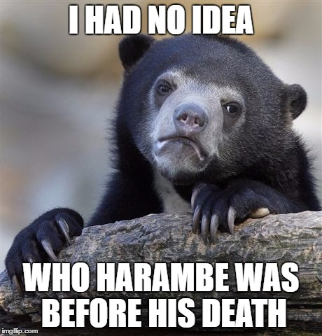 Confession Bear Meme | I HAD NO IDEA WHO HARAMBE WAS BEFORE HIS DEATH | image tagged in memes,confession bear | made w/ Imgflip meme maker