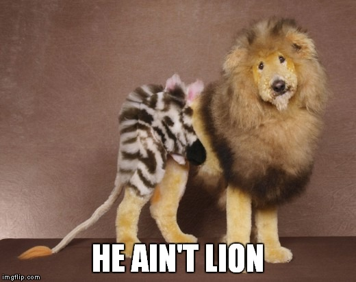 HE AIN'T LION | made w/ Imgflip meme maker