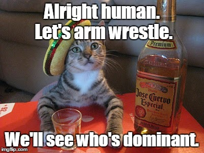 Tequila | Alright human. Let's arm wrestle. We'll see who's dominant. | image tagged in tequila | made w/ Imgflip meme maker