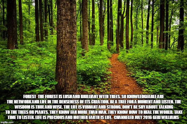 forest path | FOREST  THE FOREST IS LUSH AND BRILLIANT WITH TREES. SO KNOWLEDGEABLE ARE THE NETWORK AND LIFE IN THE DENSENESS OF ITS CREATION. BE A TREE F | image tagged in forest path | made w/ Imgflip meme maker