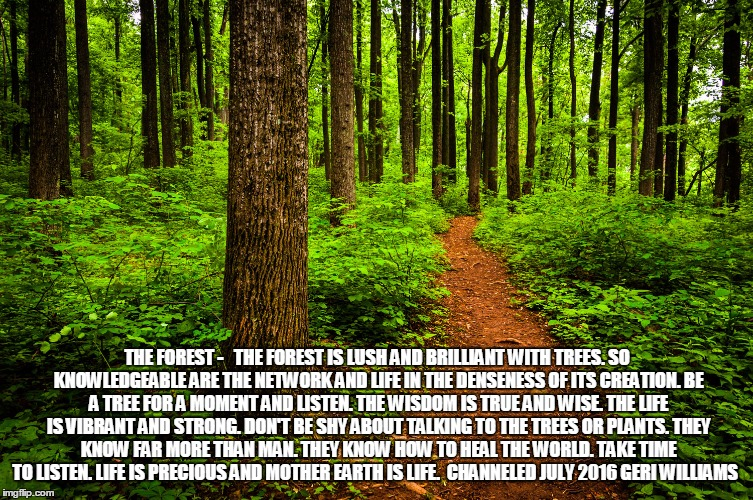 forest path | THE FOREST -   THE FOREST IS LUSH AND BRILLIANT WITH TREES. SO KNOWLEDGEABLE ARE THE NETWORK AND LIFE IN THE DENSENESS OF ITS CREATION. BE A | image tagged in forest path | made w/ Imgflip meme maker