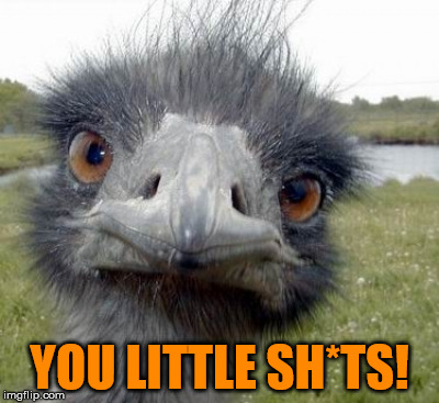 What all parents say now and then... | YOU LITTLE SH*TS! | image tagged in ostrich,funny memes,mama bird,birdy,hairy,children of the corn | made w/ Imgflip meme maker