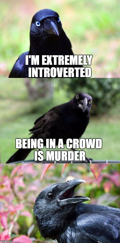 bad pun crow | I'M EXTREMELY INTROVERTED BEING IN A CROWD IS MURDER | image tagged in bad pun crow | made w/ Imgflip meme maker