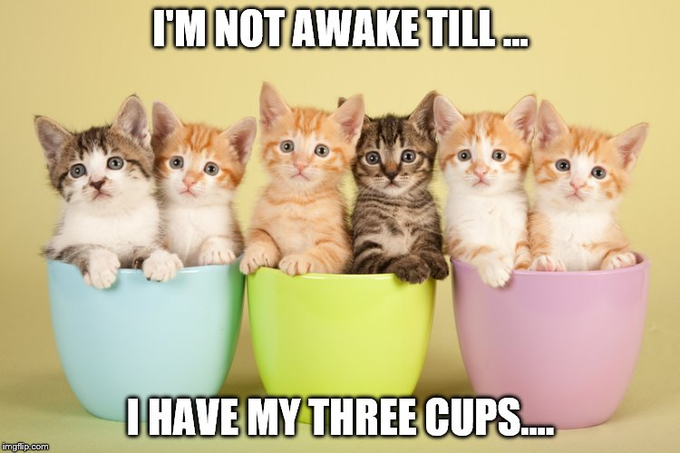 Kittens in Mugs for Coffee | I'M NOT AWAKE TILL ... I HAVE MY THREE CUPS.... | image tagged in kittens in mugs for coffee | made w/ Imgflip meme maker