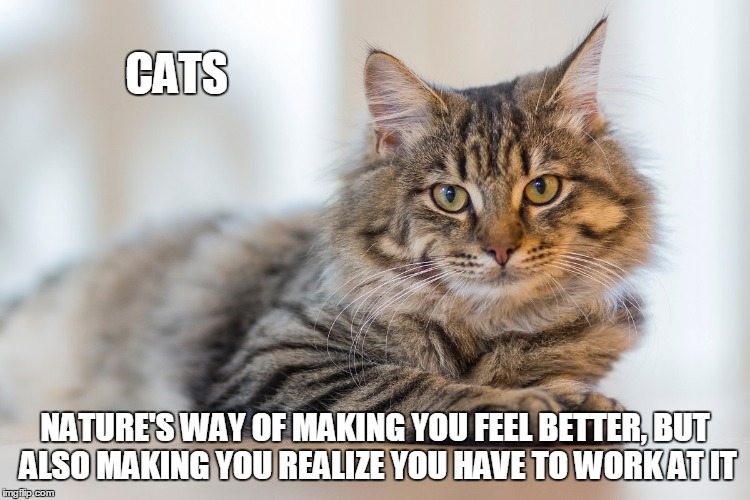 CATS NATURE'S WAY OF MAKING YOU FEEL BETTER, BUT ALSO MAKING YOU REALIZE YOU HAVE TO WORK AT IT | made w/ Imgflip meme maker