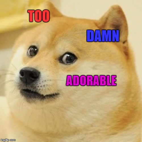Doge Meme | TOO DAMN ADORABLE | image tagged in memes,doge | made w/ Imgflip meme maker