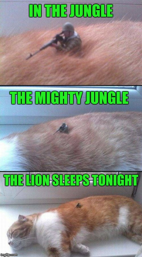 Do not stir the beast!  | IN THE JUNGLE THE MIGHTY JUNGLE THE LION SLEEPS TONIGHT | image tagged in in the jungle,the lion sleeps tonight,memes,meme,cat,song lyrics | made w/ Imgflip meme maker