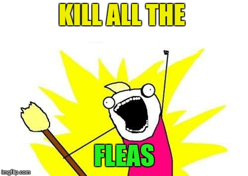 X All The Y Meme | KILL ALL THE FLEAS | image tagged in memes,x all the y | made w/ Imgflip meme maker