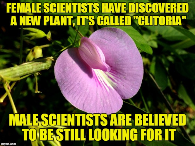 "Plant Life | FEMALE SCIENTISTS HAVE DISCOVERED A NEW PLANT, IT'S CALLED ""CLITORIA"" MALE SCIENTISTS ARE BELIEVED TO BE STILL LOOKING FOR IT 