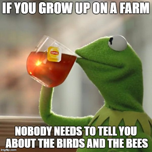But Thats None Of My Business Meme | IF YOU GROW UP ON A FARM NOBODY NEEDS TO TELL YOU ABOUT THE BIRDS AND THE BEES | image tagged in memes,but thats none of my business,kermit the frog | made w/ Imgflip meme maker