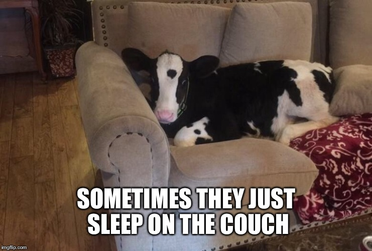 SOMETIMES THEY JUST SLEEP ON THE COUCH | made w/ Imgflip meme maker