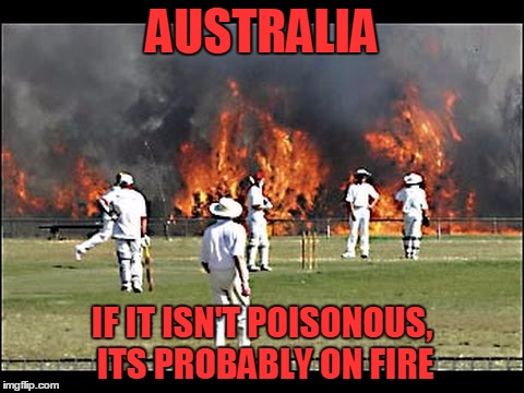 Just saying hi to some friends | AUSTRALIA IF IT ISN'T POISONOUS, ITS PROBABLY ON FIRE | image tagged in australia,cricket,fire | made w/ Imgflip meme maker