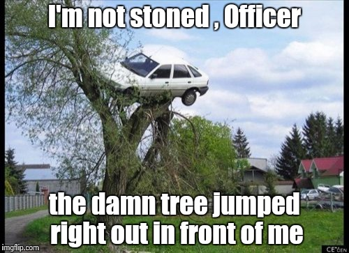 It could happen , right ? | I'm not stoned , Officer the damn tree jumped right out in front of me | image tagged in memes,secure parking,stoner,logic | made w/ Imgflip meme maker