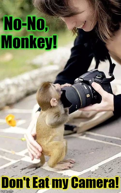 The Hungry Monkey | No-No, Monkey! Don't Eat my Camera! | image tagged in vince vance,monkeys,baby monkey,photographer monkey,professional photographer,cute animals | made w/ Imgflip meme maker