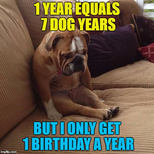 How would you feel if your birthday was celebrated every 7 years? | 1 YEAR EQUALS 7 DOG YEARS BUT I ONLY GET 1 BIRTHDAY A YEAR | image tagged in bulldogsad,memes,animals,dogs,birthdays | made w/ Imgflip meme maker