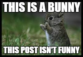 THIS IS A BUNNY THIS POST ISN'T FUNNY | image tagged in cute bunny | made w/ Imgflip meme maker