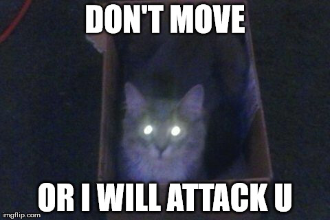 DON'T MOVE OR I WILL ATTACK U | image tagged in cats | made w/ Imgflip meme maker