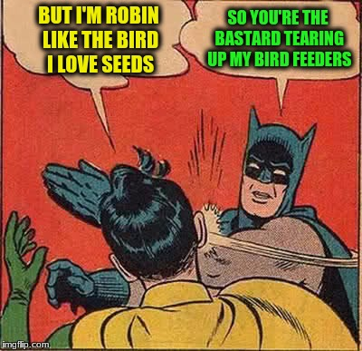 Batman Slapping Robin Meme | BUT I'M ROBIN LIKE THE BIRD I LOVE SEEDS SO YOU'RE THE BASTARD TEARING UP MY BIRD FEEDERS | image tagged in memes,batman slapping robin | made w/ Imgflip meme maker