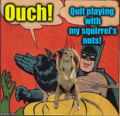 Batman Slapping Robin Meme | Ouch! Quit playing with my squirrel's nuts! | image tagged in memes,batman slapping robin | made w/ Imgflip meme maker