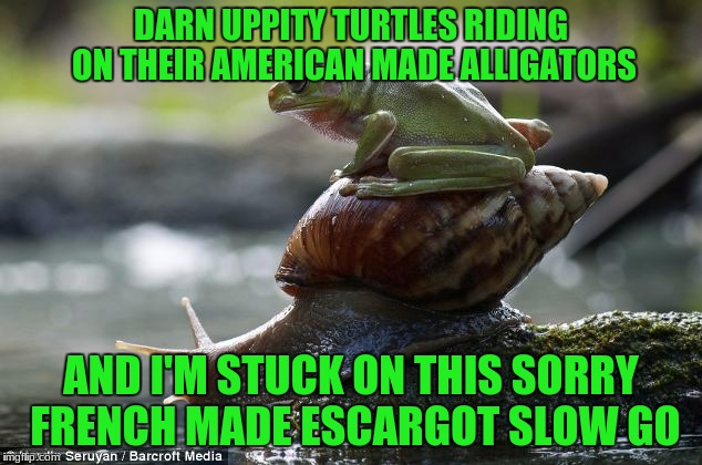 DARN UPPITY TURTLES RIDING ON THEIR AMERICAN MADE ALLIGATORS AND I'M STUCK ON THIS SORRY FRENCH MADE ESCARGOT SLOW GO | made w/ Imgflip meme maker