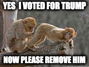 YES  I VOTED FOR TRUMP NOW PLEASE REMOVE HIM | image tagged in monkeys | made w/ Imgflip meme maker