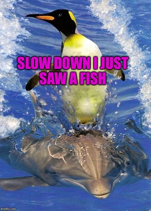SLOW DOWN I JUST SAW A FISH | made w/ Imgflip meme maker