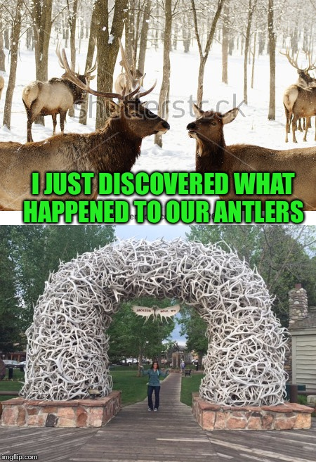 I JUST DISCOVERED WHAT HAPPENED TO OUR ANTLERS | made w/ Imgflip meme maker