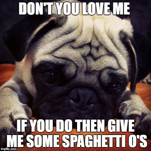 pugsnotdrugs | DON'T YOU LOVE ME IF YOU DO THEN GIVE ME SOME SPAGHETTI O'S | image tagged in pugsnotdrugs | made w/ Imgflip meme maker