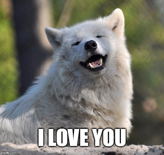 WhiteWolf | I LOVE YOU | image tagged in wolf love cuddles cute smile | made w/ Imgflip meme maker